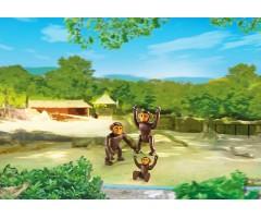 PM6650 Семья Шимпанзе